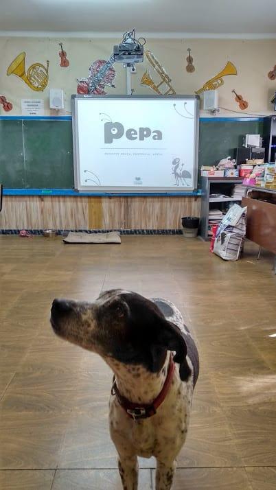 Proyecto Pepa Fundación Altarriba