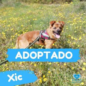 Xic ADOPTADO