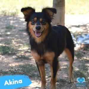 Akina, tiene carácter difícil.