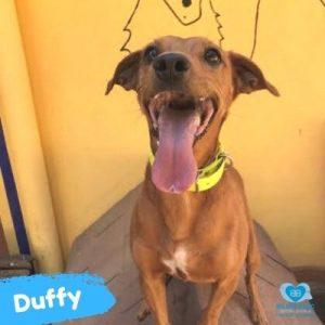 Duffy web