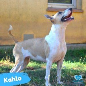 Kahlo web 2
