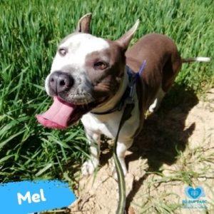 Mel web