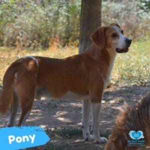 Pony web