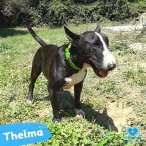 Thelma web