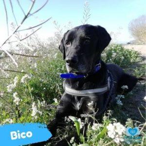 Bico web