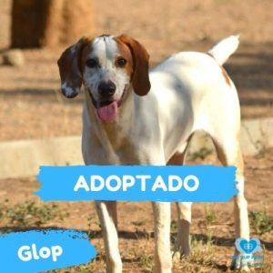 GLOP ADOPTADO