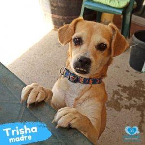 Trisha madre 9 años
